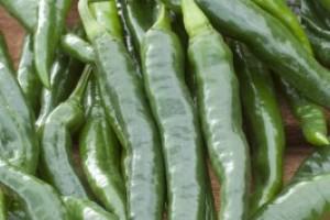 Les plants de l gumes greff s rousseau plants for Concombre gynial